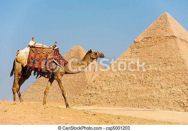 ambulante, camello, pirámides - csp5001203