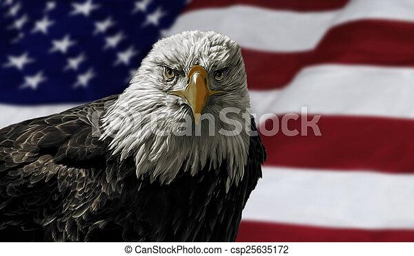 American Bald Eagle on Flag - csp25635172