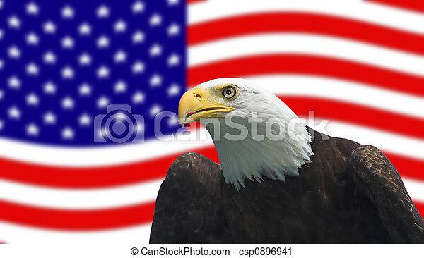 American Bald Eagle - csp0896941