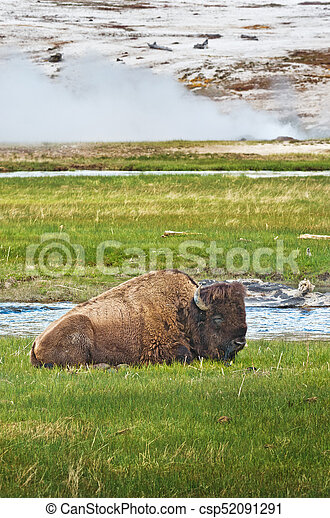 American bison in Yellowstone National Park, Wyoming, USA - csp52091291