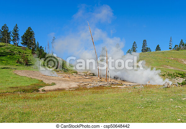 American Bison in Yellowstone - csp50648442