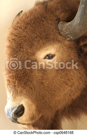 American Bison - csp0648168