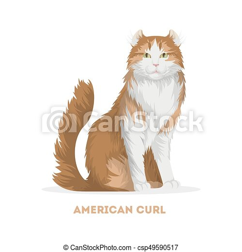 American Curl Cat Drawing