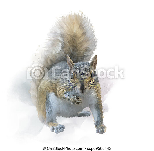 American gray squirrel on white background. watercolor painting. - csp69588442
