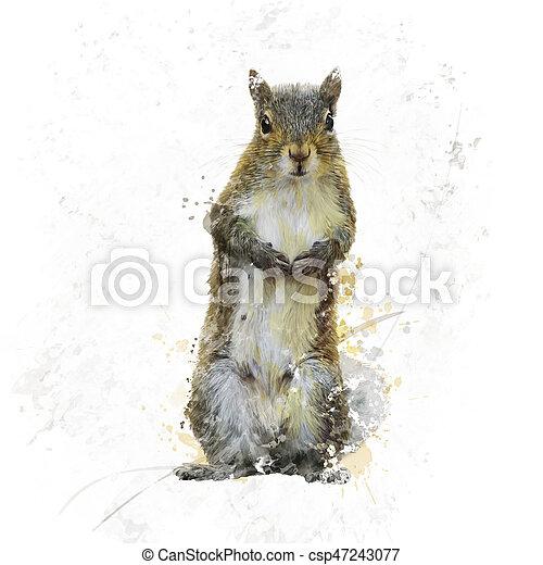 American Gray Squirrel watercolor - csp47243077