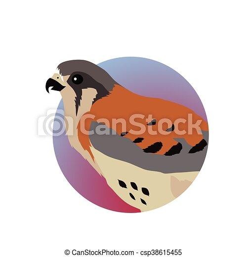 American Kestrel Flat Design Vector Illustration - csp38615455