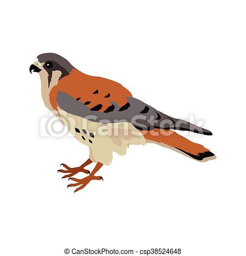 American Kestrel Flat Design Vector Illustration - csp38524648
