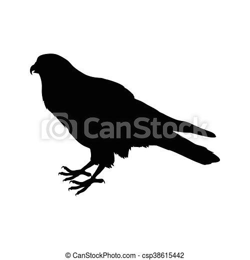 American Kestrel Flat Design Vector Illustration - csp38615442