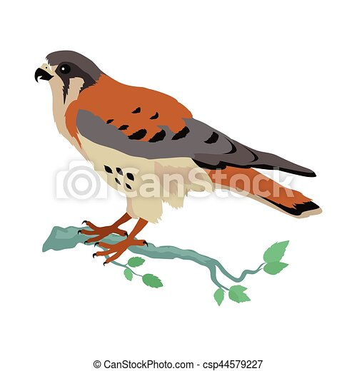 American Kestrel Flat Design Vector Illustration - csp44579227