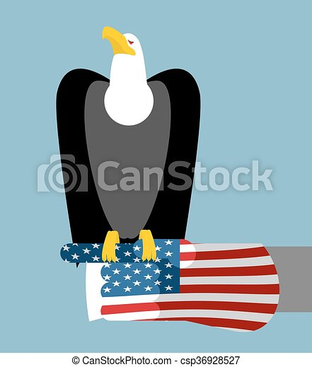 American Patriotic Eagle Hunting Bald Eagle Sitting On Vector