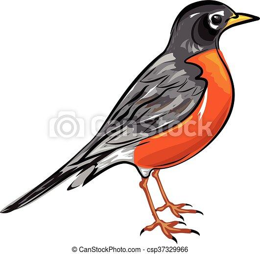 american robin bird vector illustration clip art vector search rh canstockphoto com clipart robin des bois robin clipart images