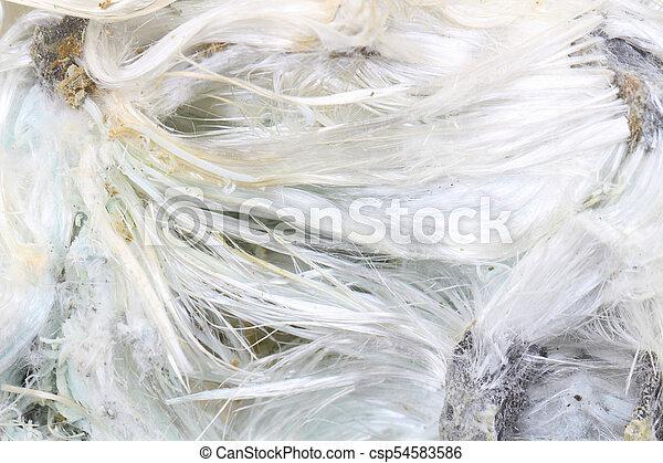 amiante, inconnu, minéral - csp54583586