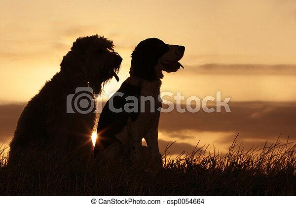 amis, coucher soleil - csp0054664