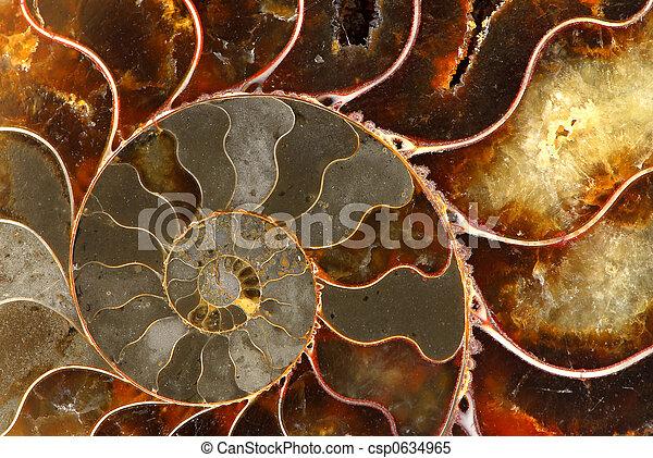 Ammolite - csp0634965