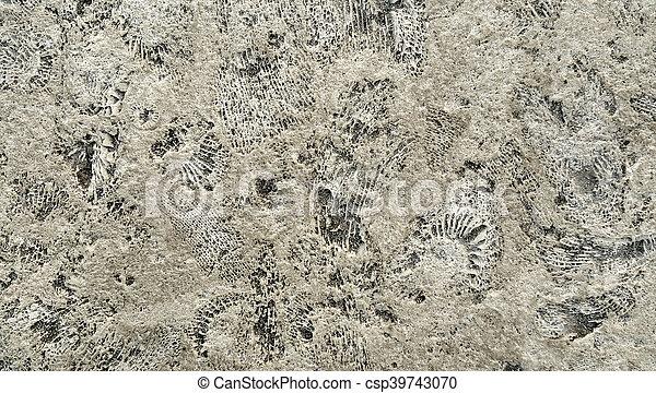 ammonite, fossiles, rocher - csp39743070