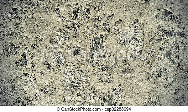 ammonite, fossiles, rocher - csp32288694