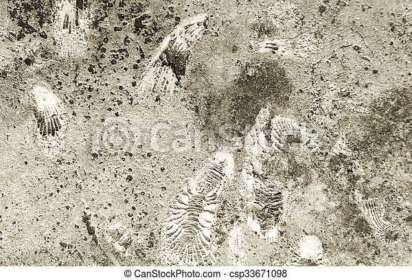 ammonite, fossiles, texture, rocher - csp33671098