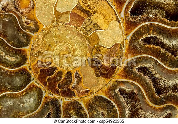 amonite, petrificado, abstratos - csp54922365