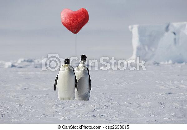 amor verdadeiro, pingüim - csp2638015