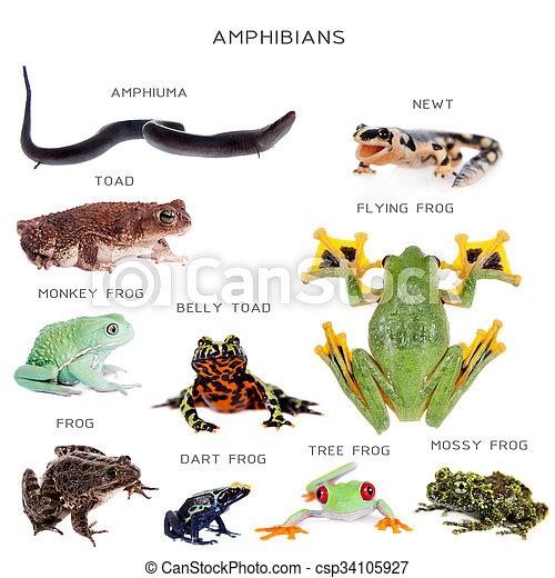Amphibian education set on white - csp34105927