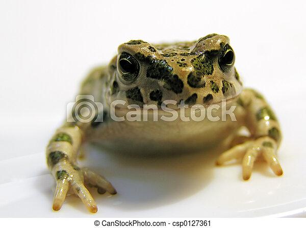amphibian - csp0127361