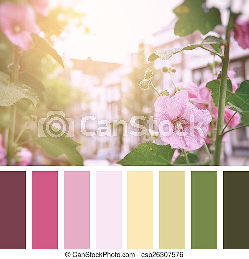 Amsterdam Palette Roses Trémières Rose Bâtiments Palette Vieux