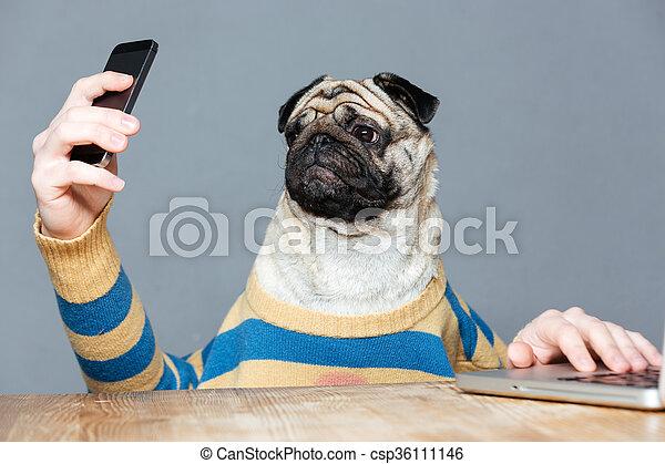 Amusing pug dog with man hands using smartphone  - csp36111146