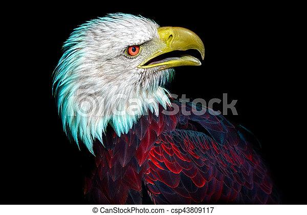 An American Identity Crisis - csp43809117
