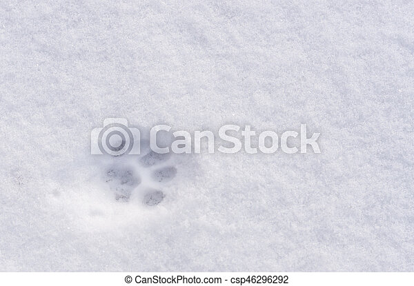 An animal footprint in the snow - csp46296292
