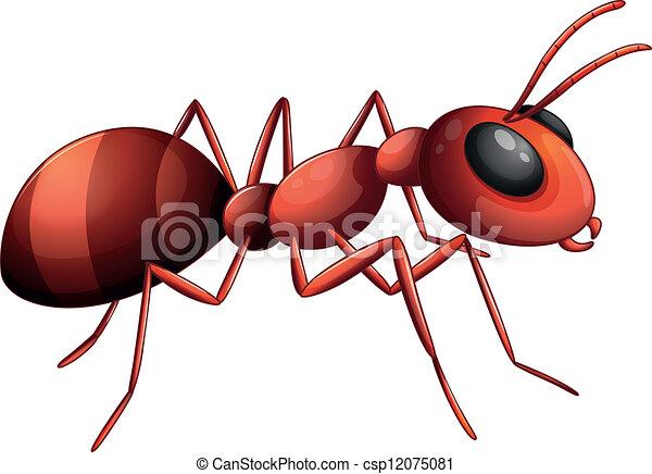 An ant - csp12075081