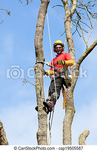 An arborist cutting a tree with a chainsaw - csp19505587