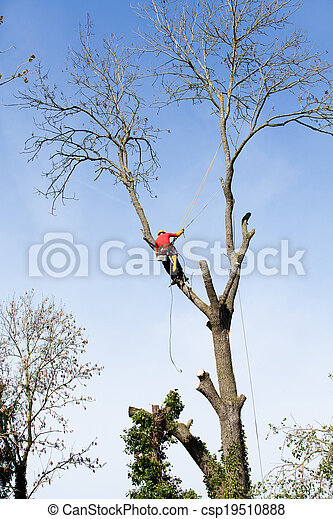 An arborist cutting a tree with a chainsaw - csp19510888