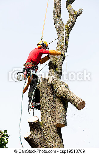 An arborist cutting a tree with a chainsaw - csp19513769