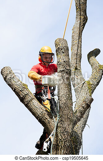 An arborist cutting a tree with a chainsaw - csp19505645