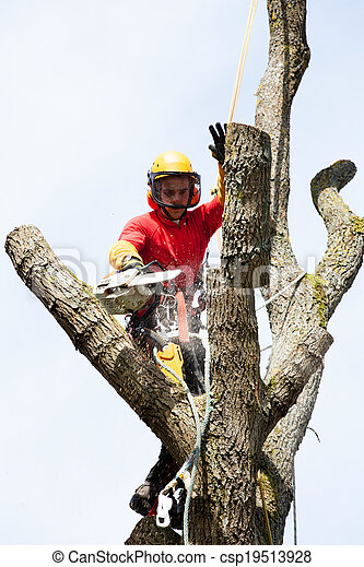 An arborist cutting a tree with a chainsaw - csp19513928