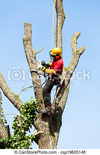 An arborist cutting a tree with a chainsaw - csp19605148
