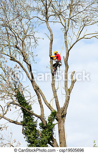 An arborist cutting a tree with a chainsaw - csp19505696