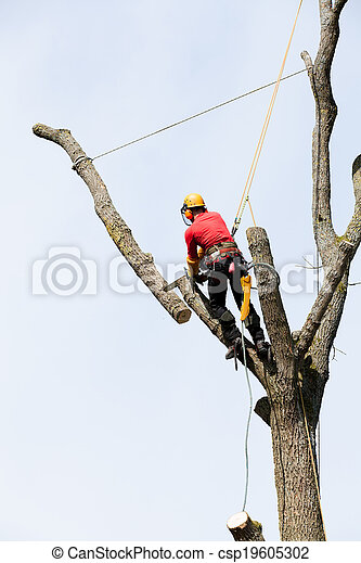 An arborist cutting a tree with a chainsaw - csp19605302