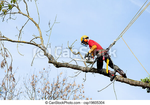 An arborist cutting a tree with a chainsaw - csp19605304