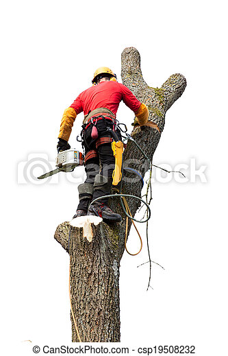 An arborist cutting a tree with a chainsaw - csp19508232