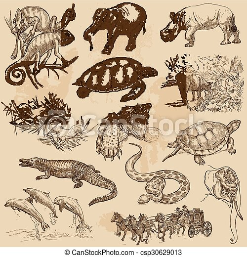 An hand drawn vector pack - ANIMALS - csp30629013
