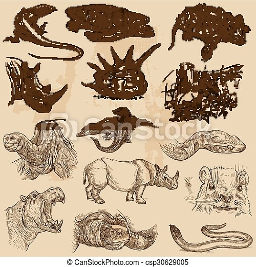 An hand drawn vector pack - ANIMALS - csp30629005