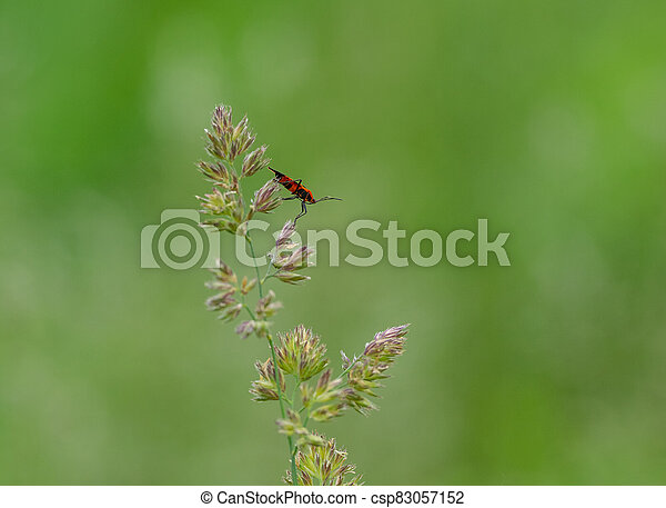 An Insect Sitting on a Grass Stem - csp83057152