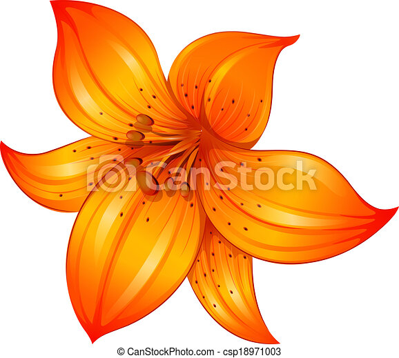 illustration of an orange lily flower on a white background vector rh canstockphoto com calla lily clipart lily flower clipart