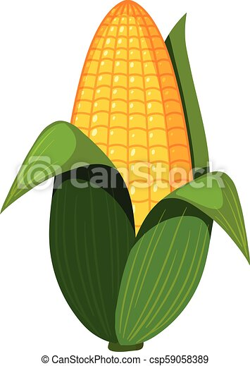 An Organic Corn on White Background - csp59058389