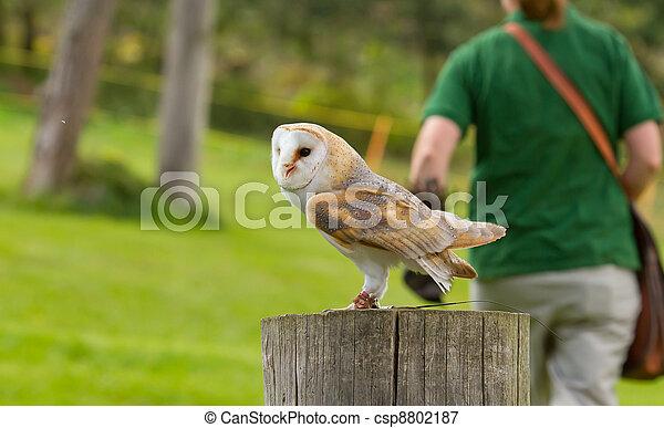 An owl in captivity - csp8802187