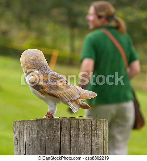 An owl in captivity - csp8802219