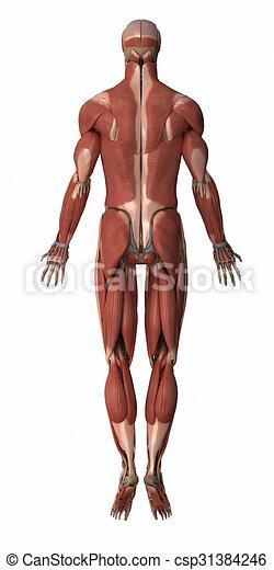 Anatómiai térkép