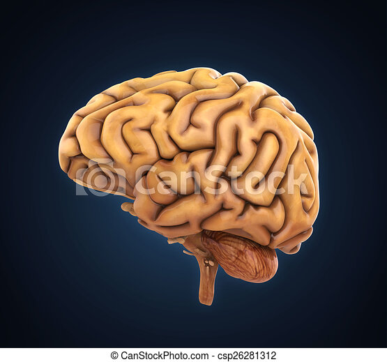 Illustration., render, anatomía, cerebro, humano, 3d clipart ...