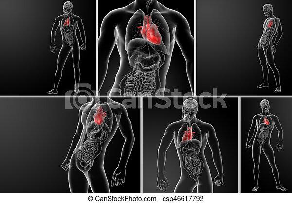 Anatomía, corazón, 3d, humano, interpretación.